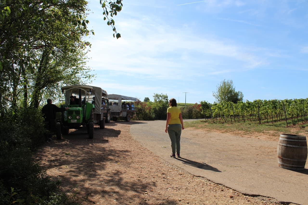 Weinbergsrundfahrt mit dem Weingut Heise aus Nierstein